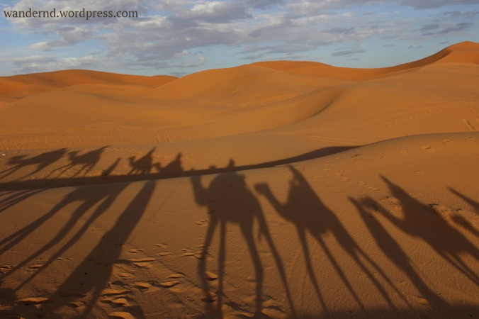 Marokko-Dromedar
