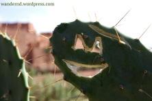 *smile* in Ouarzazate